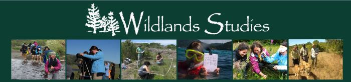 Wildlandsstudies