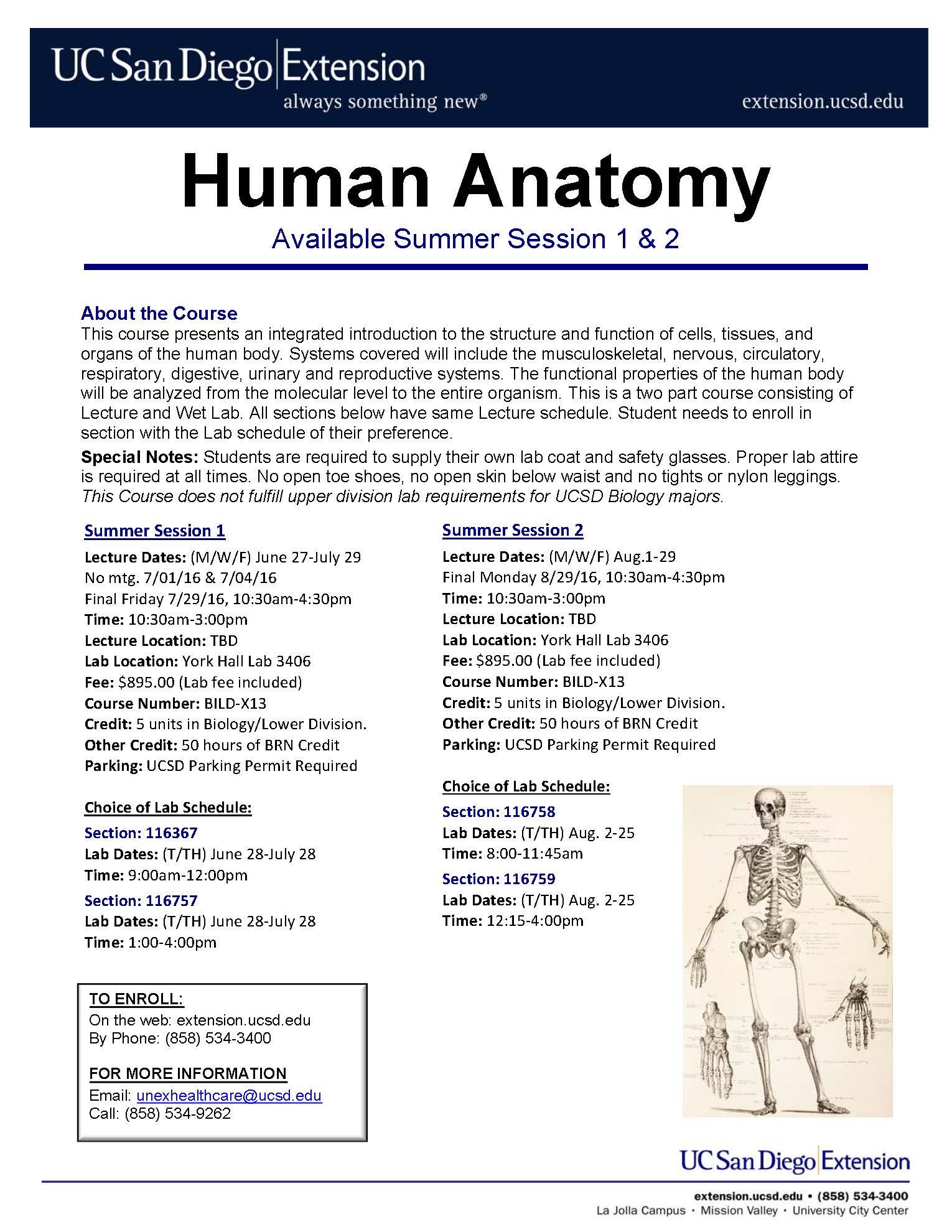 Human Anatomy Flyer SU16 | UC San Diego - Biology Bulletin
