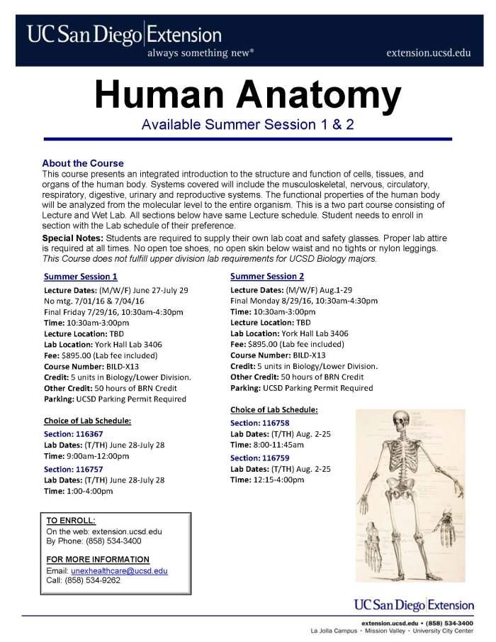 Human Anatomy Flyer SU16